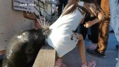 VIDEO: Sea lion grabs girl off dock