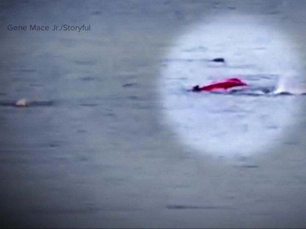 WATCH:  New video shows kayaker attacked by great white shark