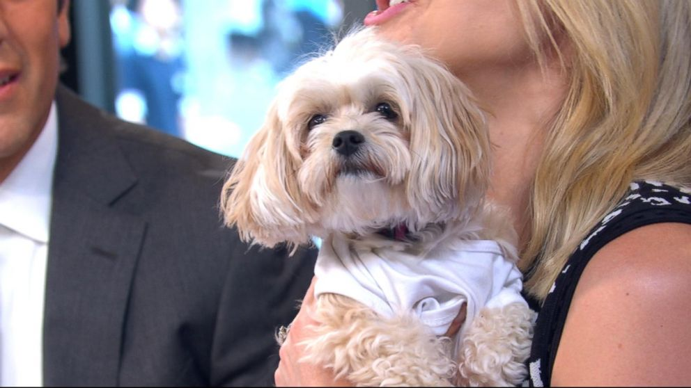 VIDEO: 'GMA' celebrates Take Your Dog to Work Day