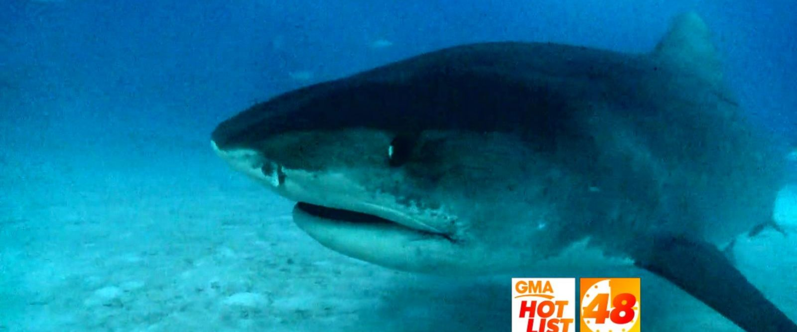 VIDEO: 'GMA' Hot List: Experts warn of an increase in great white sharks off Cape Cod
