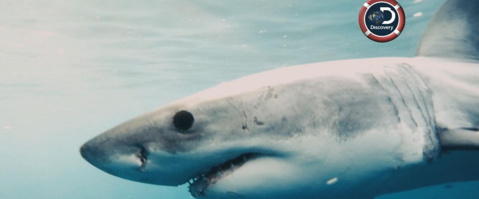 VIDEO: Are there great white sharks in New York City?