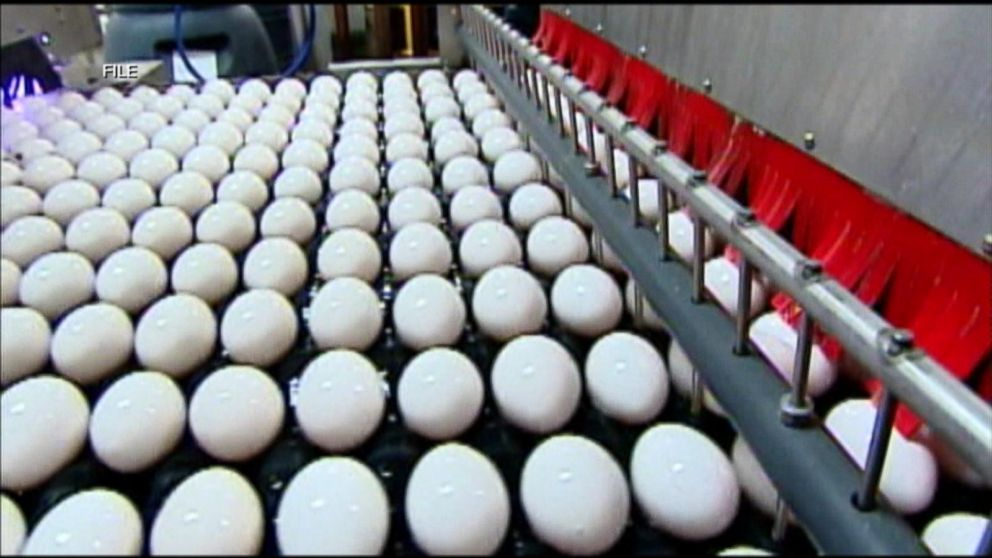 200 million eggs recalled due to salmonella  fears