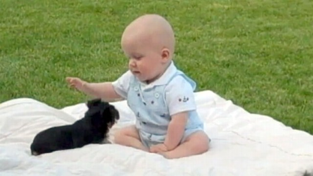 VIDEO: Video of baby Benson and his Yorkie has gone viral with more than 350,000 views.