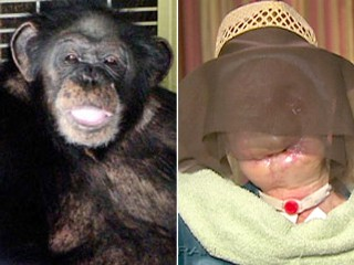 charla nashs chimp incident Chimpanzee attack in this oct 19, 2003 file photo, travis was attacking 55-year-old charla nash the chimp can be heard grunting at times on the tape, as herold cries, he's killing my friend told the today show that the incident was a freak thing.