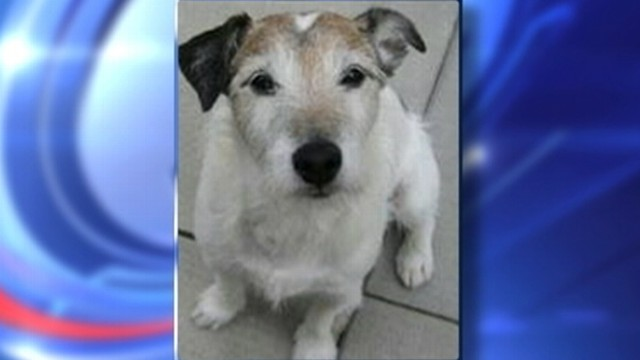VIDEO: The NYC canine underwent emergency surgery to remove his owners change.