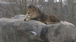 VIDEO: Protecting Zoo Animals From Cold Weather