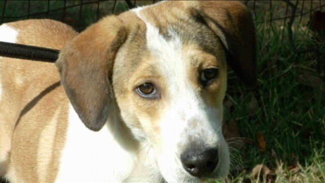 VIDEO: For info on adopting Daniel or another rescued dog visit www.ehrdogs.org.
