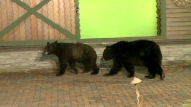 VIDEO: Pennsylvania weatherman ran for safety after bears walked on to the outdoor set.