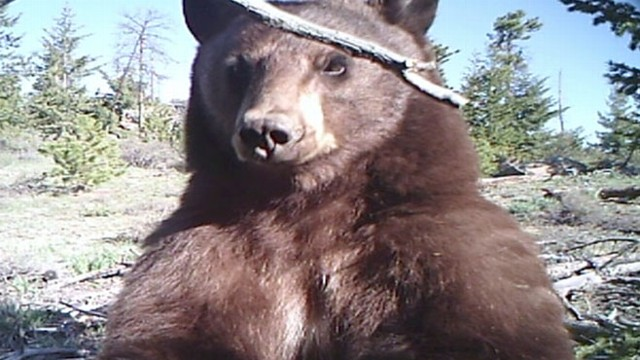 VIDEO: Bear Gets On-Camera Close up