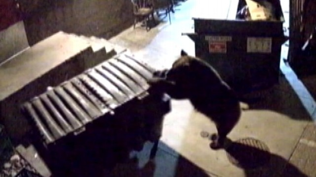 VIDEO: Bear Seeks Next Meal at Restaurant
