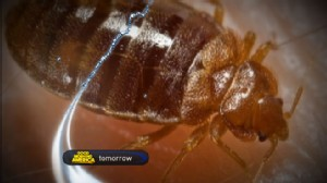 VIDEO: How to Get Rid of Bed Bugs