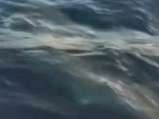 Watch: Great White Shark Caught by Fisherman: Caught on Tape