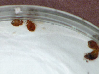 VIDEO: Avoid Bedbug Infestation
