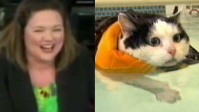 VIDEO: News Anchor Loses It Over Cat