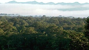 VIDEO: The Amazon is home to three-quarters of Earths known living things.
