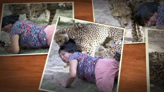 VIDEO: Violet Archibald was attacked while posing with two cheetahs in game reserve.
