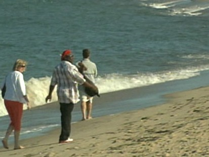 VIDEO: Authorities on Cape Cod, Mass. close beaches after numerous shark sightings.