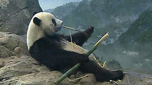 VIDEO: Beloved giant pandas at the National Zoo in D.C. might be returned to China.