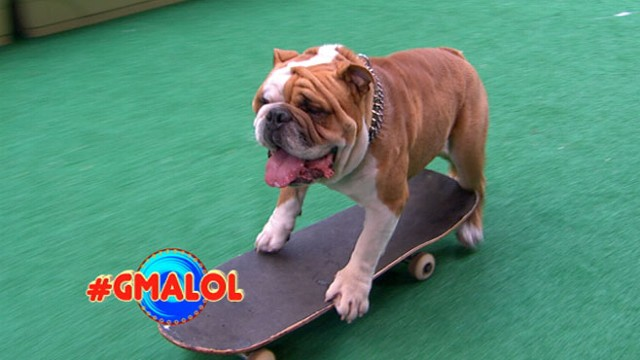 Video: Dog Skateboards Down NYC Sidewalks