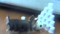 VIDEO: Gunner the dog's jumping skills go up against Misa Minnie's bowling ability.