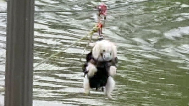 VIDEO: Puppy Ziplined to Safety