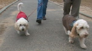 VIDEO: Are Coats for Dogs Necessary?