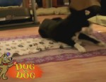 VIDEO: Dog Competition