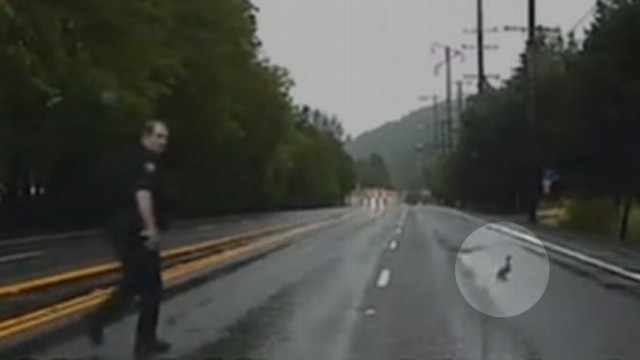 VIDEO: Ducks Interrupt Police Chase