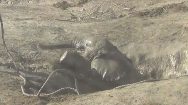 VIDEO: Workers with Amboseli Trust in Kenya used their Land Rover to save a baby elephant.