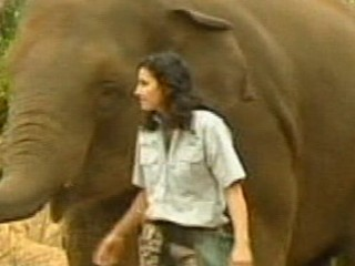 Watch: Zookeeper Crushed by Elephant Fights for Her Life