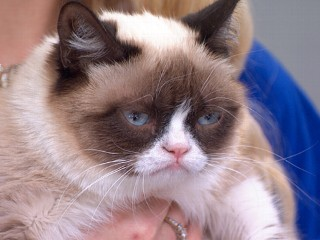 Full Episode: GMA 03/22: Grumpy Cat Visits Times Square
