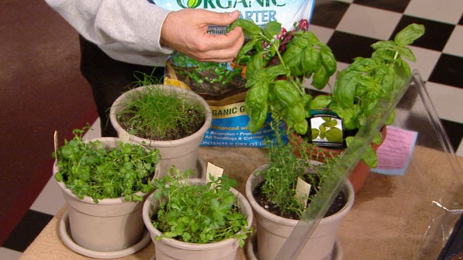 VIDEO: Matthew Benson says the season is perfect for growing fresh herbs indoors.