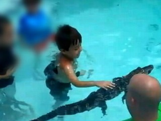 Watch: Florida Attraction Brings Alligators to Pool Parties