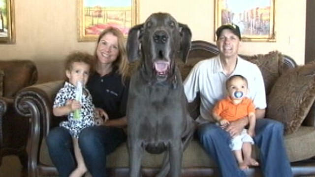 "VIDEO: Canine boasts 90,000 Facebook fans and has also been a guest on ""Oprah."""
