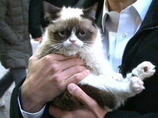 Watch: Grumpy Cat: Exclusive Interview With Feline Phenom