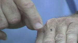 VIDEO: Expert gets bitten in Everglades to determine where to spray pesticides.