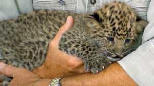 VIDEO: Jack Hanna stops by with an anteater, a monkey and a spotted leopard.