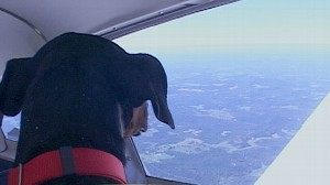VIDEO: Pilots rescue shelter animals and fly them to new welcoming homes.