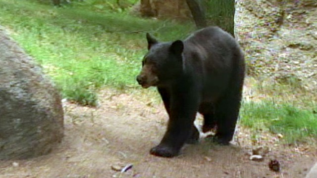 VIDEO: Neal Karlinsky highlights videos showing close encounters between humans, bears.