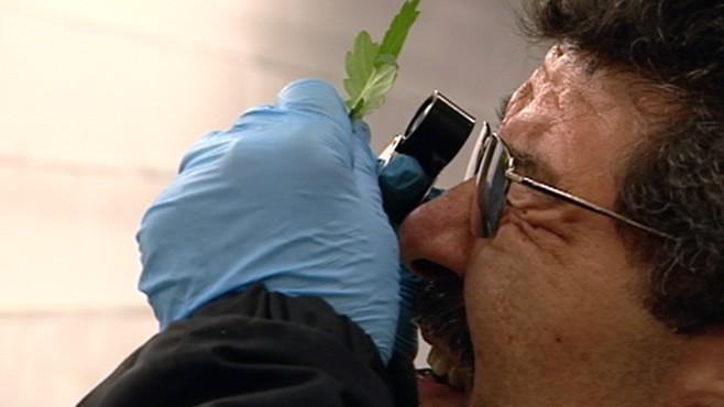 VIDEO: Customs works to keep invasive species on imported flowers out.