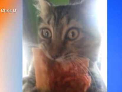 VIDEO: Cat Chows Down on Pizza, Wont Share