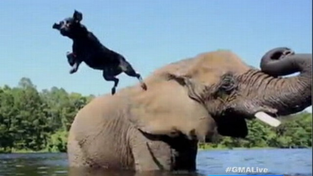 VIDEO: Unlikely Friends, Dog and Elephant, Play in Watering Hole