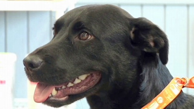 VIDEO: Dog Travels 500 Miles Home to His Owner