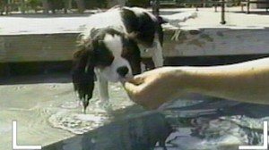 VIDEO: Pool Safety for your Pet