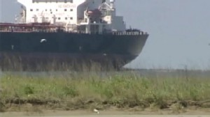VIDEO: Tar balls from the Gulf oil spill have been found in Galveston, Texas.