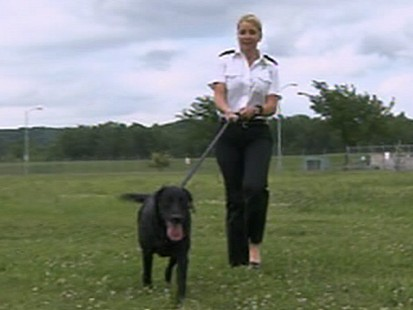 VIDEO: New airline offers safe travel for four-legged passengers.