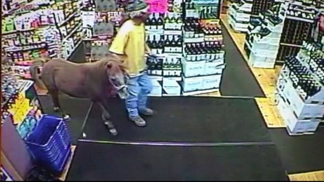 VIDEO: Pony Crashes a Liquor Store