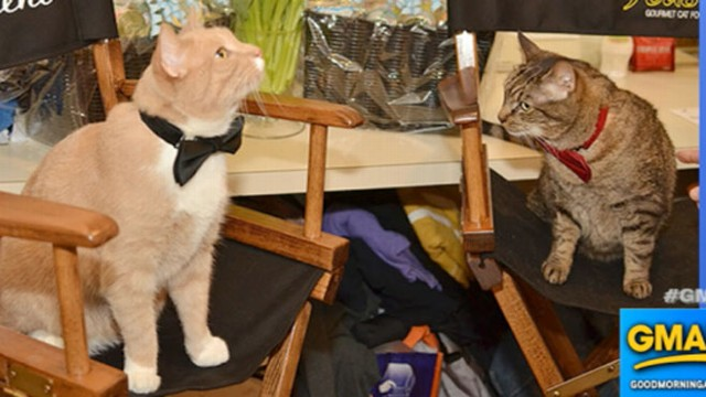 VIDEO: Breakfast at Tiffanys Broadway Play Has Backstage Cat Drama