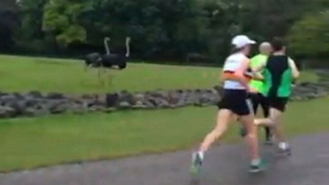 Video: Play of the Day Viewers Choice: Zoo Animals Join Race