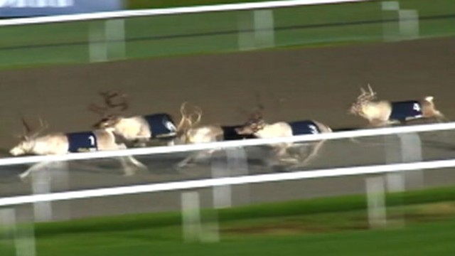VIDEO: Santas reindeer competed in the first annual Reindeer Derby outside of London.
